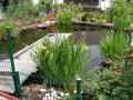Bewohner im Gartenteich!