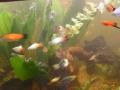 Das Süßwasseraquarium II