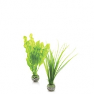 Oase biOrb Pflanzen Set klein grün