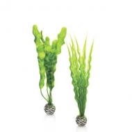 Oase biOrb Pflanzen Set Mittelgroß grün