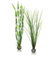 Oase biOrb Pflanzen Set groß grün