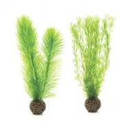 Oase biOrb Federfarn Set klein grün