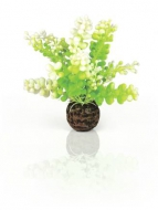 Oase biOrb Aquarien Caulerpa grün