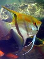 Diversa Aquarien, Unterschränke und Zubehör