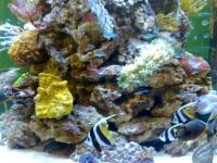 Meerwasseraquarium Interzoo 2012