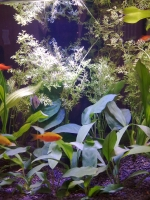 Süsswasseraquarium Interzoo 2012